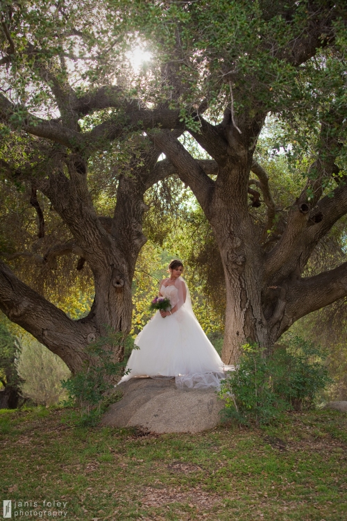 bridein trees
